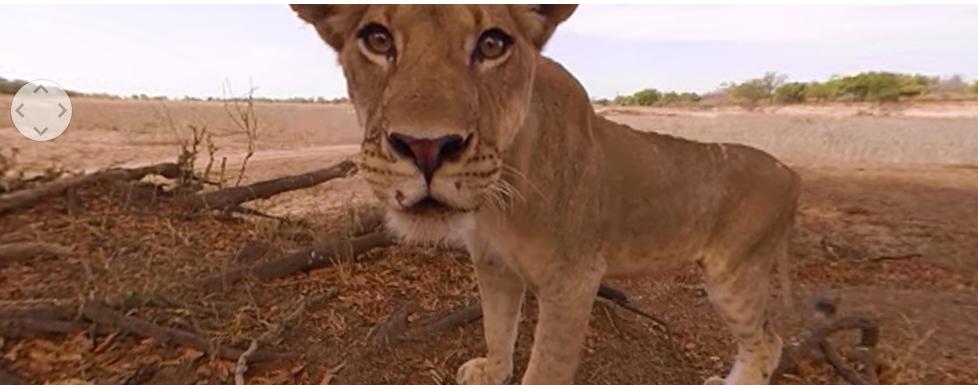 Captura de video 360 de animales